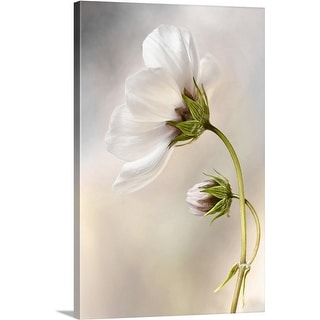 Mandy Disher Premium Thick-Wrap Canvas entitled Cosmos