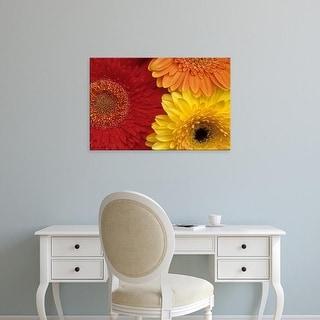 Easy Art Prints Daisy Gilardini's 'Gerber Daisy' Premium Canvas Art