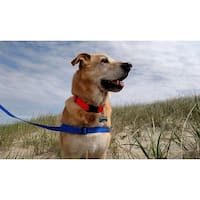 The Walk Your Dog With Love  THE NEO All-In-Wonder Dog Harness with the leash built right in
