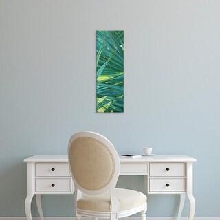 Easy Art Prints Suzanne Wilkins's 'Fan Palm II' Premium Canvas Art