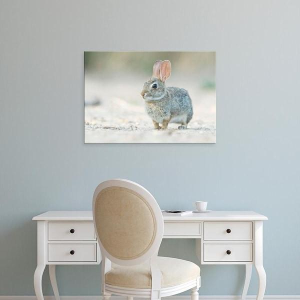 Easy Art Prints Rob Tilley's 'Desert Cottontail Rabbit' Premium Canvas Art