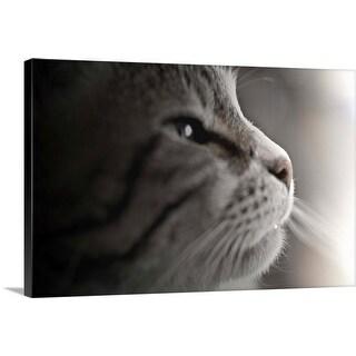 """Close up of cat."" Canvas Wall Art"