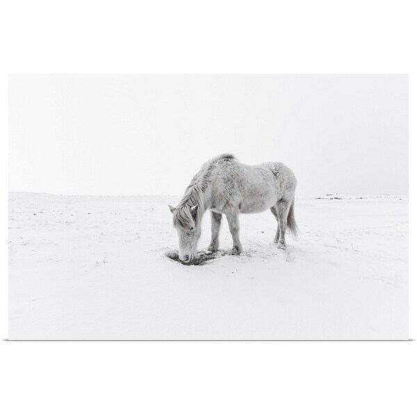 """""""Gray horse grazing in snow."""" Poster Print"""