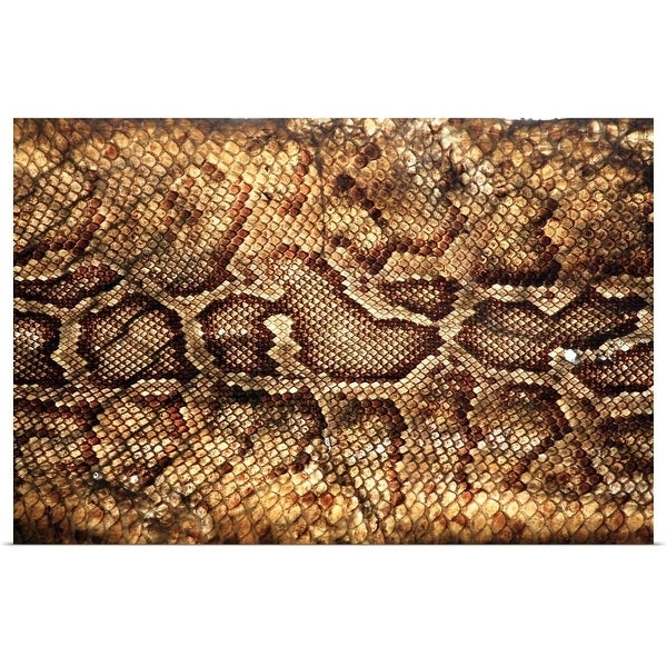 """Close up of Snake skin."" Poster Print"