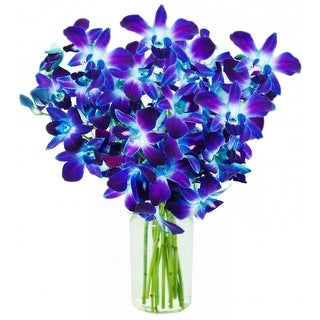 KaBloom Mother's Day Special: Exotic Blue Sapphire Orchid Bouquet of 10 Fresh Blue Dendrobium Orchids from Thailand with Vase