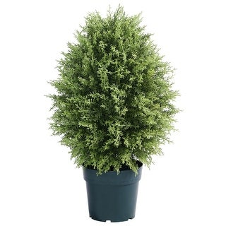 """30"""" Cypress Tree in Round Pot - N/A"""
