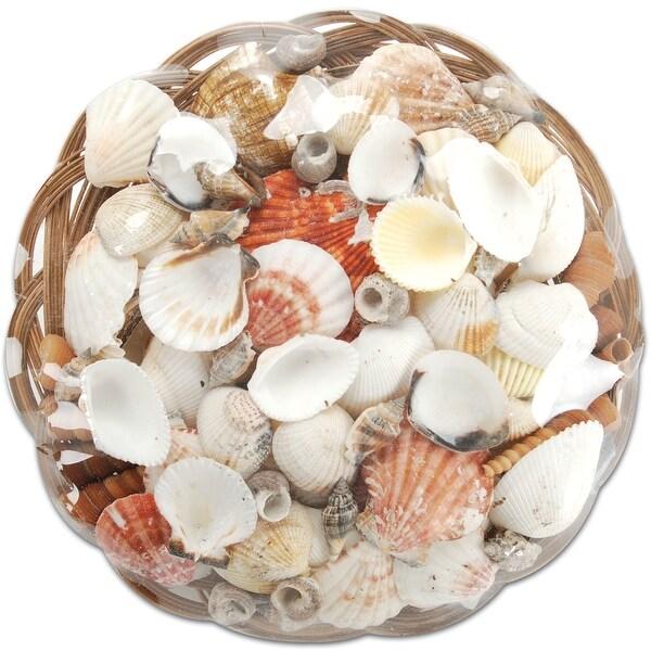 """Sea Shell Basket 10""""-Natural"""