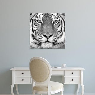 Easy Art Prints PhotoINC Studio's 'Tiger' Premium Canvas Art