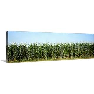 """""""Corn crop in a field, Wisconsin"""" Canvas Wall Art"""