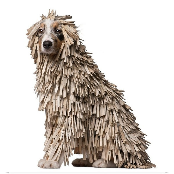 Shop Australian Shepherd puppy full of Clothespins (5 months old