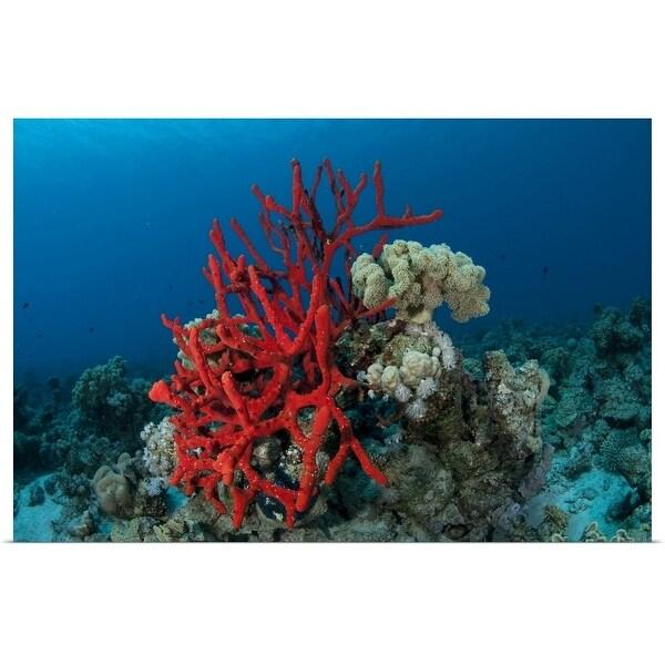 849398727846 Shop Red rope sponge, Carless Reef, Red Sea - Multi-color - Free ...