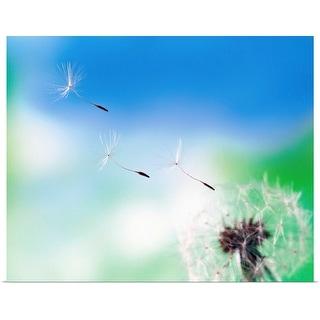 """Dandelion seeds blowing from dandelion seed head"" Poster Print"