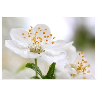 """Plum blossom"" Poster Print"
