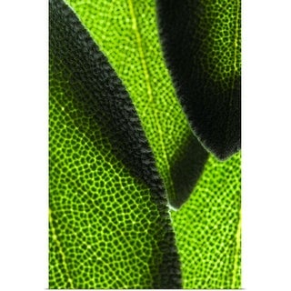 """""""Close-up of green leaves"""" Poster Print"""