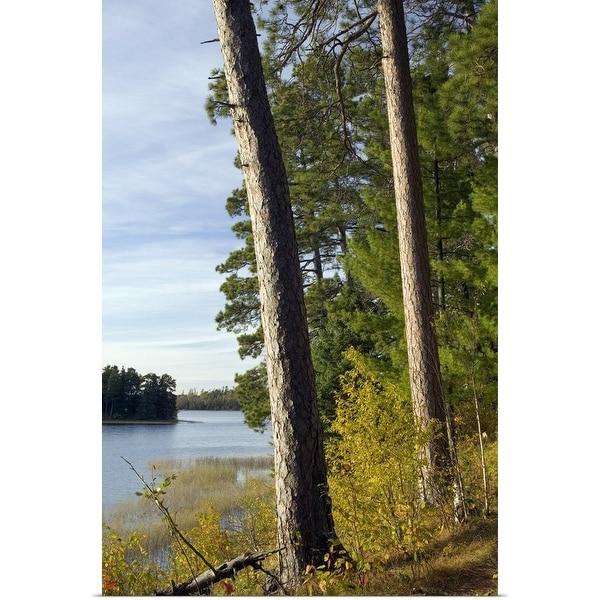 """Red pine trees growing along Lake Itaska, Itaska State Park, Minnesota"" Poster Print"