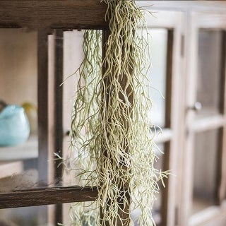 """G Home Collection Rustic Artificial Spanish Moss Vines 42"""" Long"""