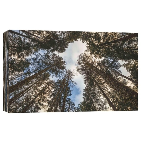 """PTM Images 9-102120 PTM Canvas Collection 8"""" x 10"""" - """"Beauty in the Trees"""" Giclee Trees Art Print on Canvas"""