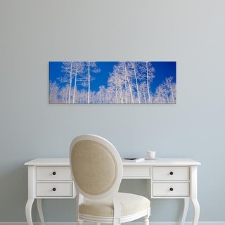 Easy Art Prints Panoramic Images's 'Low angle view of aspen trees in a forest, Utah, USA' Premium Canvas Art