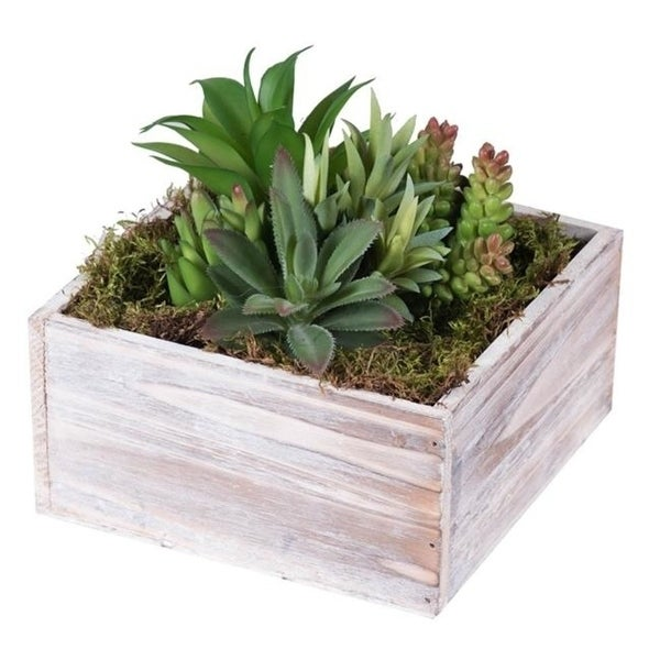 Christmas Succulent Arrangement.Vickerman F12207 Succulent Arrangement Everyday Floral In Wood Planter 7 In