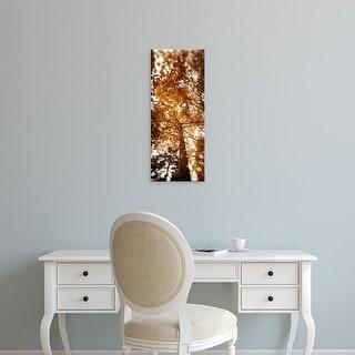 Easy Art Prints Panoramic Image 'Autumn trees, Volunteer Park, Capitol Hill, Seattle, Washington' Canvas Art