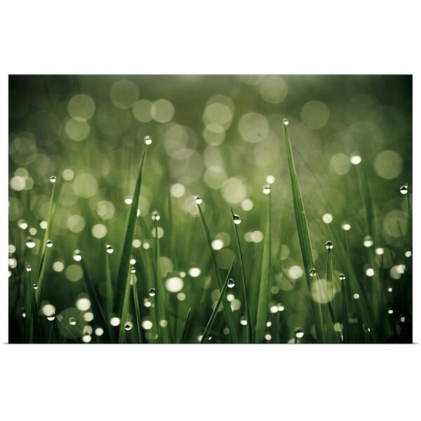 """""""Water drops on grass, France."""" Poster Print"""
