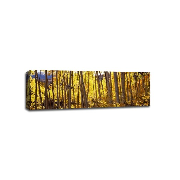 Aspen Trees - Patterns - 48x16 Gallery Wrapped Canvas Wall Art