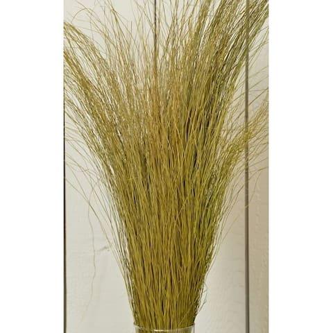 Ornamental Fountain Grass - Dried Fountain Grasses 12 oz -- Case of 20 Bunches - Natural