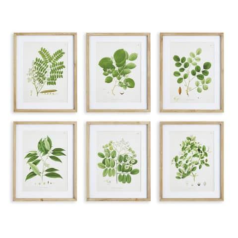 Tree Leaf Study