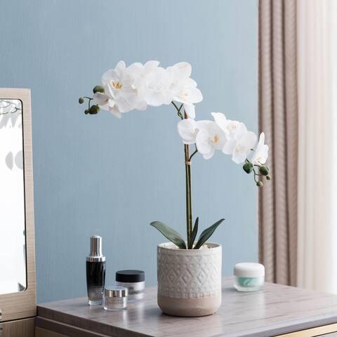 Crisp White Romantic Orchid