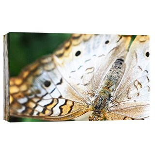 "PTM Images 9-101882  PTM Canvas Collection 8"" x 10"" - ""Butterfly Az 7"" Giclee Butterflies Art Print on Canvas"