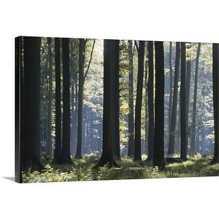 """Forest"" Canvas Wall Art"