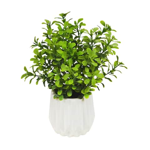 """9"""" Boxwood with White Ribbed Container"""