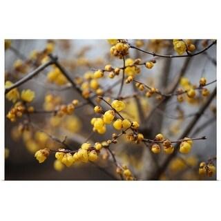 """Yellow spring"" Poster Print"