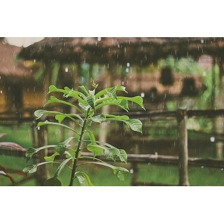 Rain And Plants Photograph Wall Art Canvas (More options available)