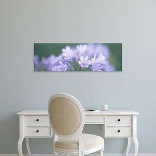 Easy Art Prints Panoramic Images's 'Flowers CA' Premium Canvas Art