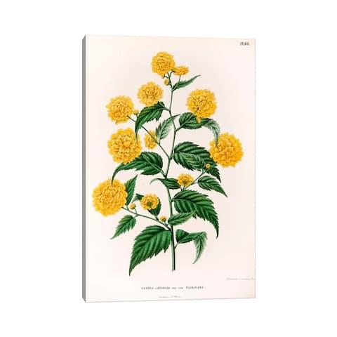 "iCanvas ""Kerria Japonica (Pleniflora)"" by Abraham Jacobus Wendel Canvas Print"