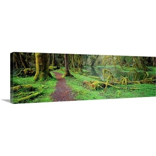 """""""Quinault Rain forest Olympic National Park WA"""" Canvas Wall Art"""
