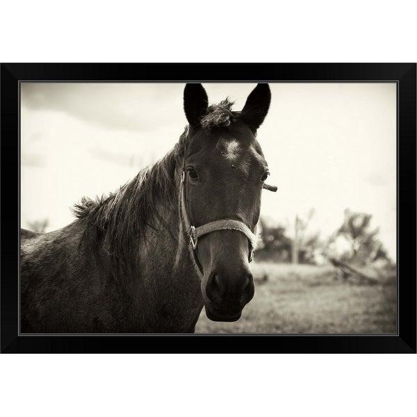 """Close up of a horse"" Black Framed Print"