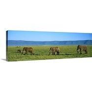 Premium Thick-Wrap Canvas entitled Elephants Ngorongoro Crater Tanzania Africa