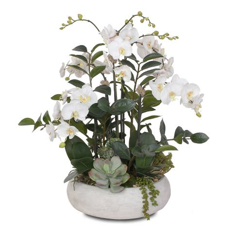 Two Tone White Silk Phalaenopsis Orchids, Succulents, ZZ Plant in Pot - 24W x 24D x 27H