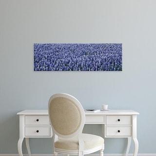 Easy Art Prints Panoramic Images's 'Bluebonnets TX' Premium Canvas Art