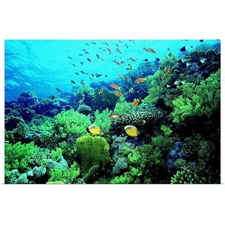 """""""Tropical fish swimming over reef"""" Poster Print"""
