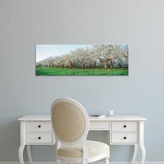 Easy Art Prints Panoramic Image 'Cherry trees in an orchard, Mission Peninsula, Traverse City, Michigan' Canvas Art