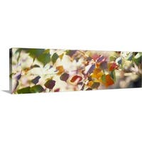 Premium Thick-Wrap Canvas entitled Chinese Tallow Leaves - Multi-color