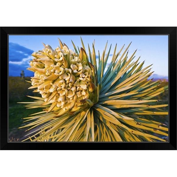 """Joshua Tree Bloom."" Black Framed Print"