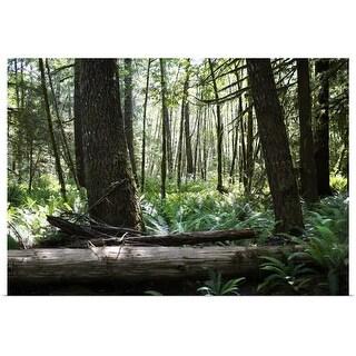 """Rainforest, British Columbia, Canada"" Poster Print"