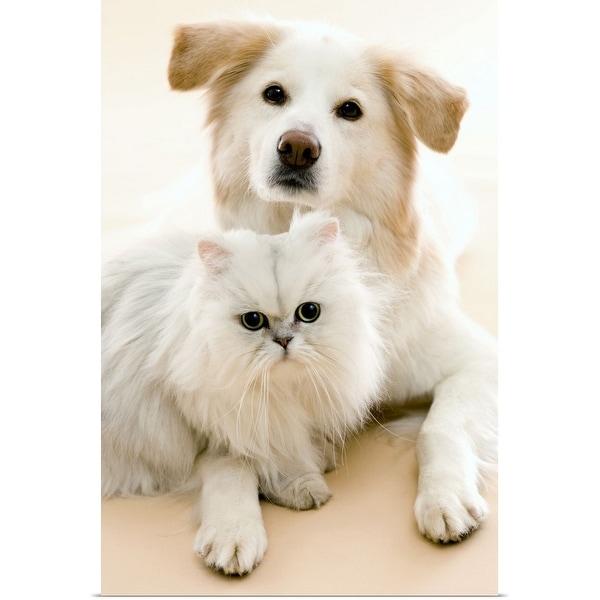"""Studio shot of cat and dog"" Poster Print"
