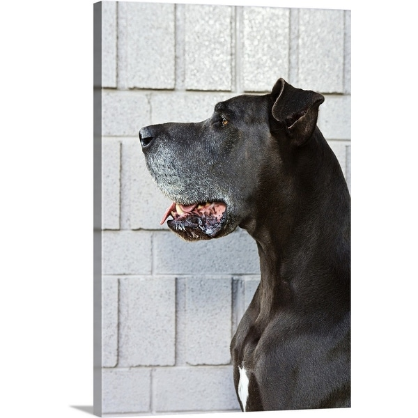 """""""Great Dane standing against a patterned wall"""" Canvas Wall Art"""