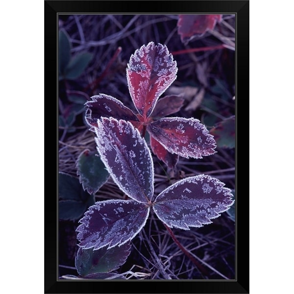 """Leaves with frost"" Black Framed Print"