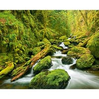 Brewster DM909 Green Canyon Cascades Wall Mural